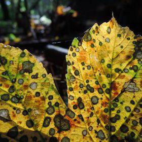 Světlo podzimního listu