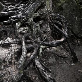 Strážce lesa