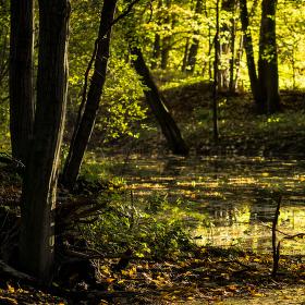 Lužní les XVII - Přírodní rezervace Rezavka