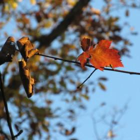 Sám na větvi
