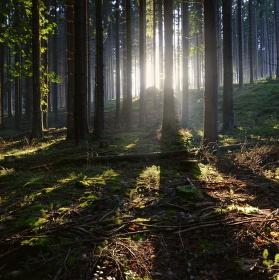 V hlubinách lesů