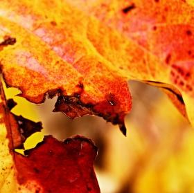 Podzimní rozparek