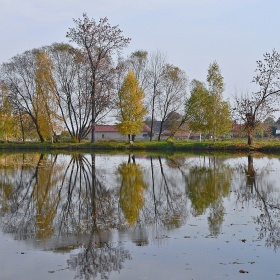 Milčický rybník