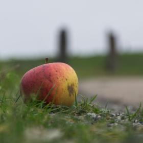 Jablko u silnice čekající