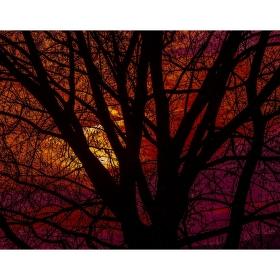 Koruna stromu při západu slunce