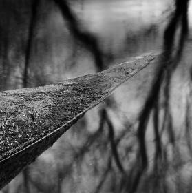 Osudy stromů