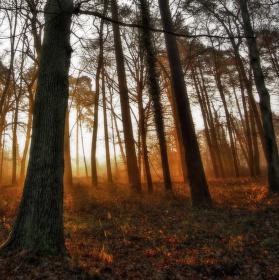 Ranní lesík