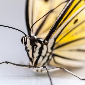 z výstavy tropických motýlů