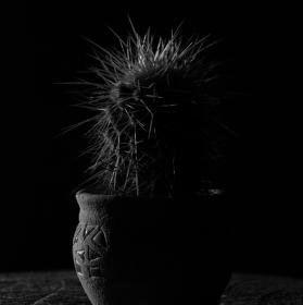 Akt kaktusu :-)