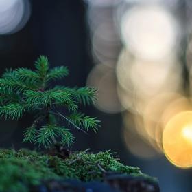 -Lesní relax-
