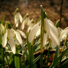 Rozkvět jara