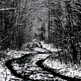 Poslední sníh 2015