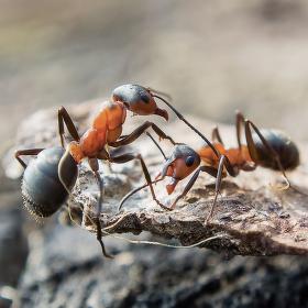Mraveniště ožívají