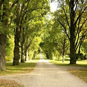 Podzimní alej na Sychrově