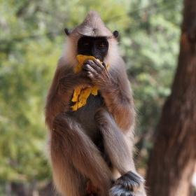 ...klidně zapózuji ale o banán se nedělím............