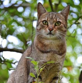 Kočičí póza