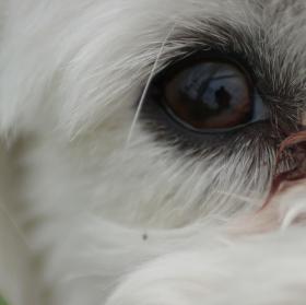 vstup do psí duše