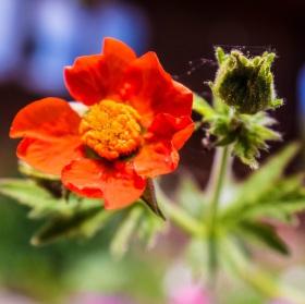 kvetinkovo pavučinkovo