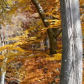 ...podzim skrz celý les ...