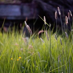 Večerní focení - Síla trávy