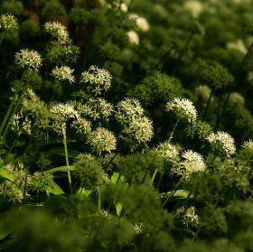 Lužní les XXVI - Přírodní rezervace Polanský les