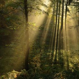 Podzimní les v Ostravě