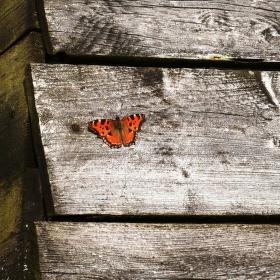 Prkna a motýl
