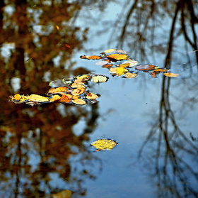 podzim v hladině