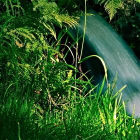 V trávě ukrytá