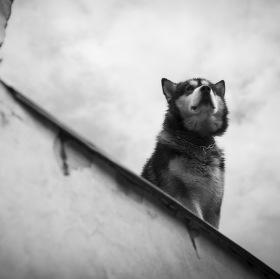 Pes na zdi