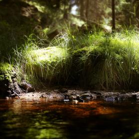 Lesní snění