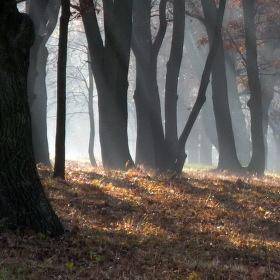 mezi duby