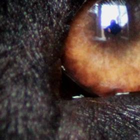 V oku