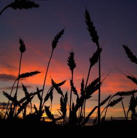 Klasy při západu slunce
