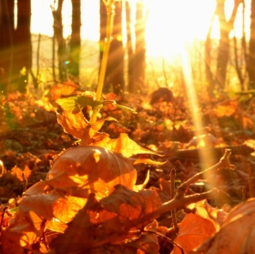 Paprsky podzimu
