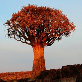 Svítání nad Kalahari