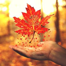 Můj malý podzim