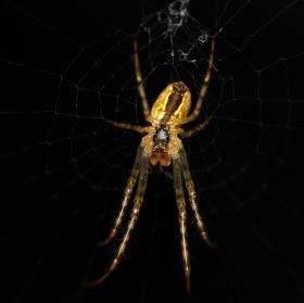 Podvozek pavouka :)