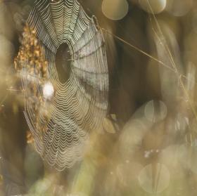 Ranní pavučinka...