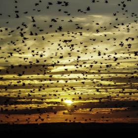 zvedáme se, bude tma  ............ aneb Alfred Hitchcock: Ptáci