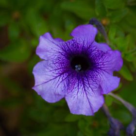 Další květina :)