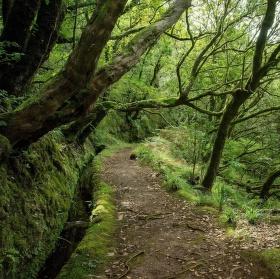 Zeleným lesem