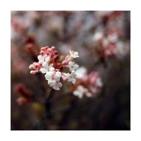 Jaro u královny Anny