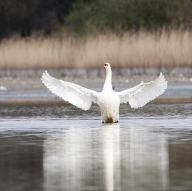 Anděl rybníků