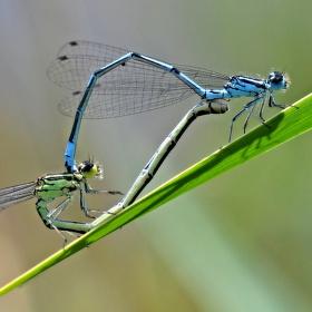 Vážky v akci