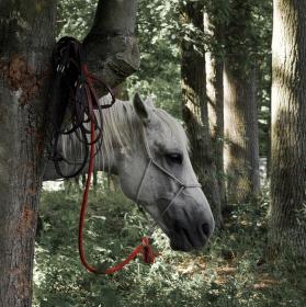 Kůň bez těla