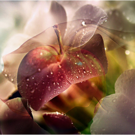 kouzelné jablíčko