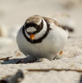 Co se děje v písku
