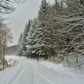Cesta zimní krajinou