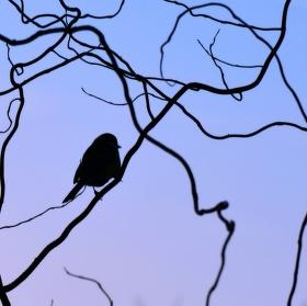 Ranní ptáče...